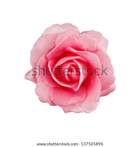 pink rose isolated on white background #137505896