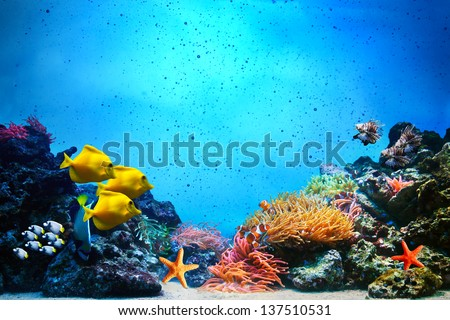 Underwater scene. Coral reef, colorful fish groups and sunny sky shining through clean ocean water. Space underwater for you to fill or just use standalone. High res #137510531