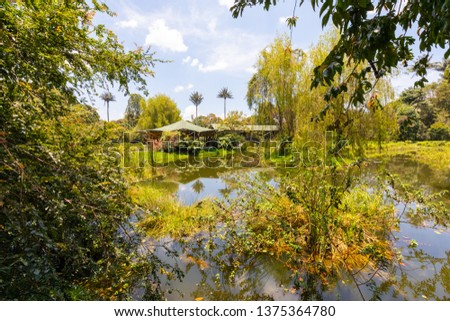 Bogota Colombia April 8  Small lake with aquatic plants in the botanical garden of Bogota, located in the center of the city,  visited every day for its remarkable biodiversity Shoot on April 8, 2019 #1375364780