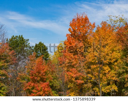 Trees With Colorful Fall Leaves #1375898339