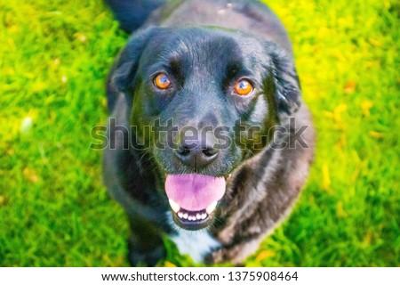 Dog in the garden #1375908464