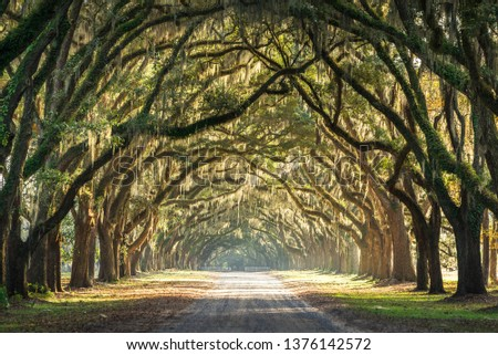 A short drive from downtown Savannah, Georgia is a historic site called Wormsloe Plantation. It is one of the most beautiful live oak lined path one can travel through in the lowcountry of Georgia.