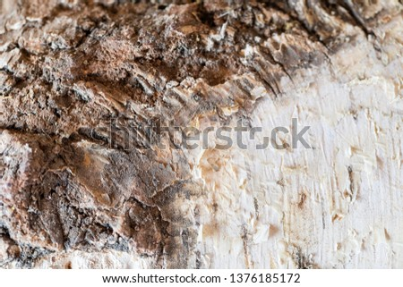 Texture of rough bark of a tree. Ready photo background. Soft focus. Macro. #1376185172