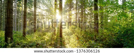 A wonderful morning in a forest with bright sunlight shining through the trees #1376306126