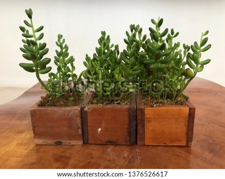 Small green plants in wooden pots on a wooden table with white background #1376526617