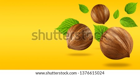 Creative layout made of nuts hazelnut and leaf on pastel blue background. Macro concept. Nuts hazelnut mockup as package design element. Full depth of field. Food concept. #1376615024