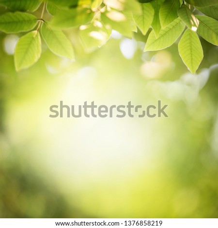 Background nature green leaf on blurred greenery in forest with copy space. #1376858219