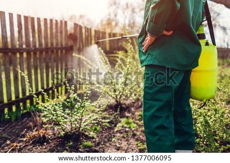 Senior farmer spraying bush with manual pesticide sprayer against insects in spring garden. Agriculture and gardening concept #1377006095