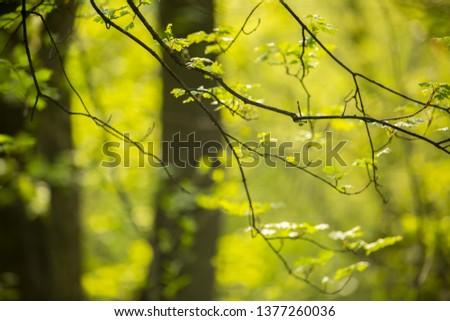 Green blurred background #1377260036