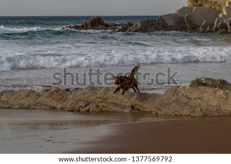 dogs on the beach of Atxabiribil in Sopelana #1377569792