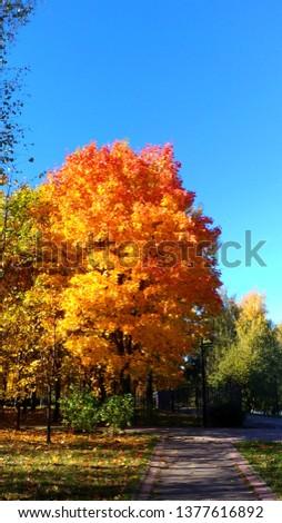 Photo.Colors of golden autumn, enjoy the beauty. #1377616892