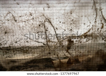 Dusty Spider Web Window #1377697967