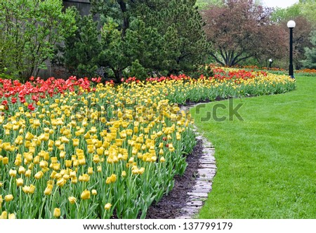 A splash of  red and yellow colored tulips cover a park area during the Spring Festival in Ottawa, Canada. #137799179
