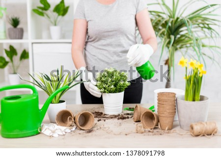 spring concept - close up of female gardener hands planting and watering flowers with spray bottle #1378091798