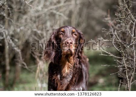 The dog portrait #1378126823