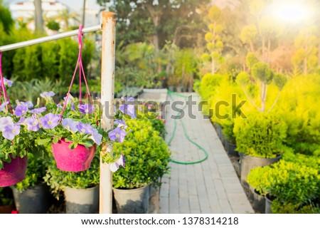 vegetable garden in late summer. Herbs, flowers and vegetables in backyard formal garden. Eco friendly gardening #1378314218