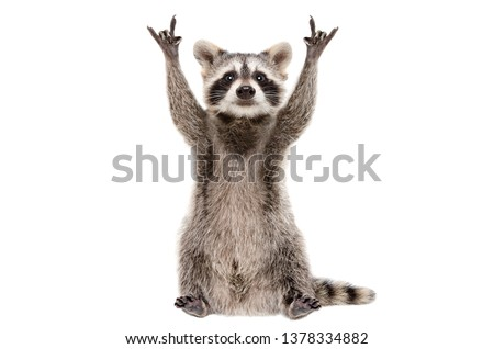 Funny raccoon showing a rock gesture isolated on white background Royalty-Free Stock Photo #1378334882