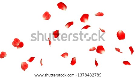 Rose Petals Stock Image with white background #1378482785