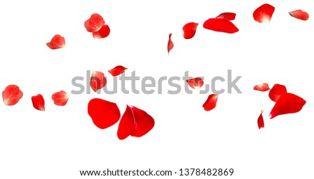 Rose Petals Stock Image with white background #1378482869