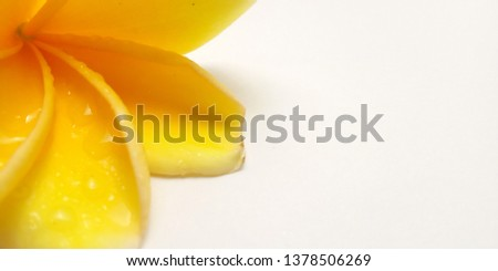 Concept, Close Up, Yellow Background with Frangipani, Element Design for message, quote, information text placement #1378506269