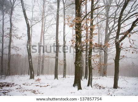 Winter forest #137857754