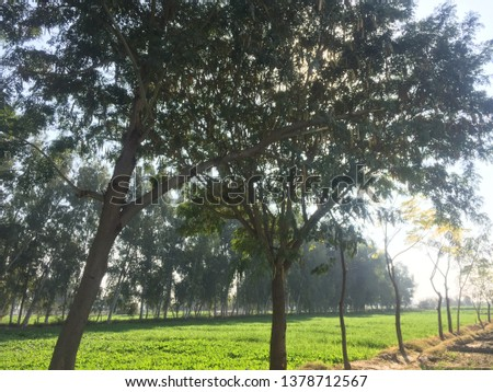 Beauty of fields rural areas  #1378712567