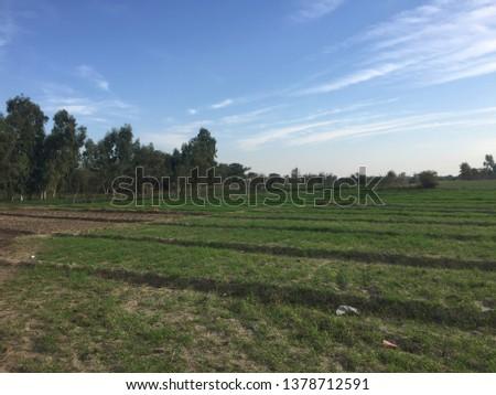 Beauty of fields rural areas  #1378712591