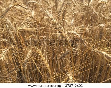 Beauty of fields rural areas  #1378712603
