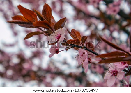Pink spring flowers #1378735499