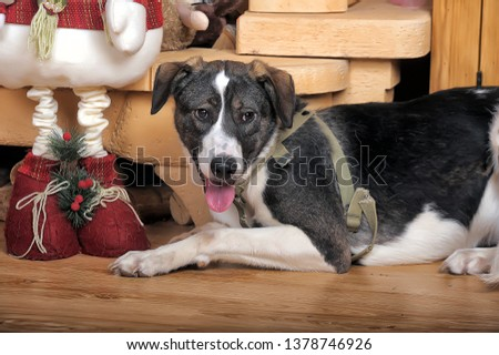 Dog in Christmas. Decoration, background. #1378746926