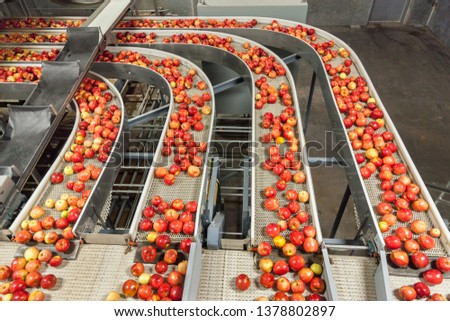Clean and fresh gala apples on a conveyor belt in a fruit packaging warehouse for presize #1378802897
