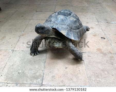 turtle tortoise reptile closeup #1379130182