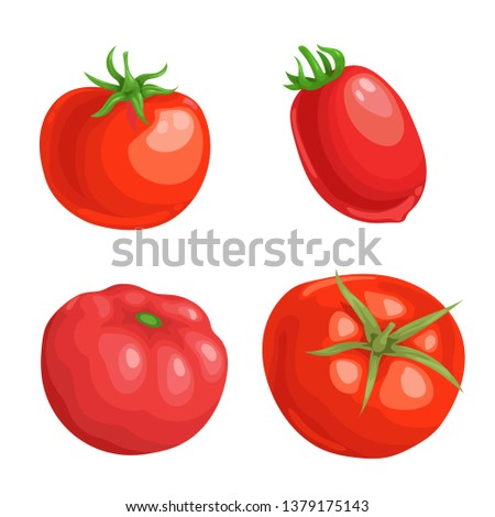 Cartoon different types tomatoes set. Red ripe vegetables isolated on white background. Vector illustrations. #1379175143