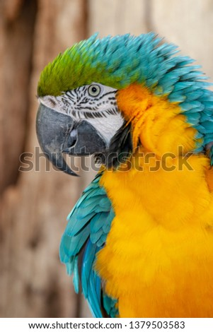 parrot parks and reserves of brazil #1379503583