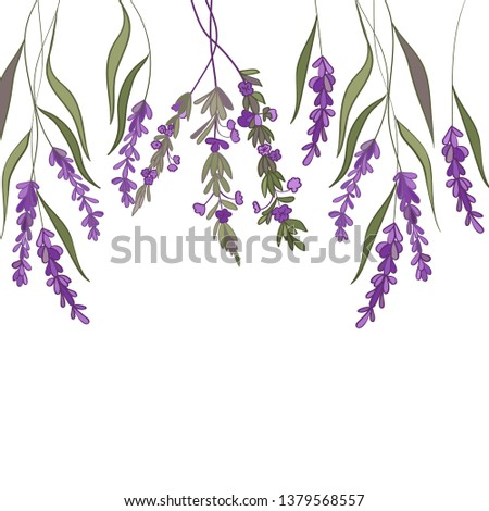 Frame with lavender #1379568557