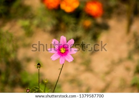 Colourful flowers of India #1379587700