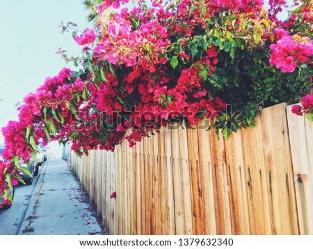 New fence with bogenvia blooming #1379632340
