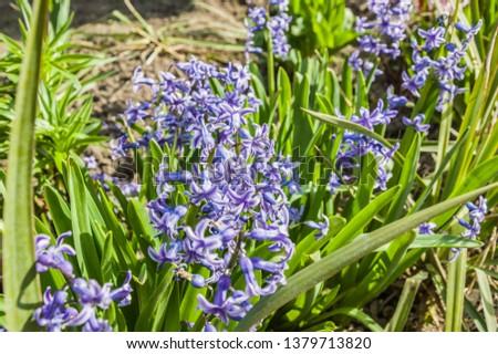 blue flowers in spring #1379713820