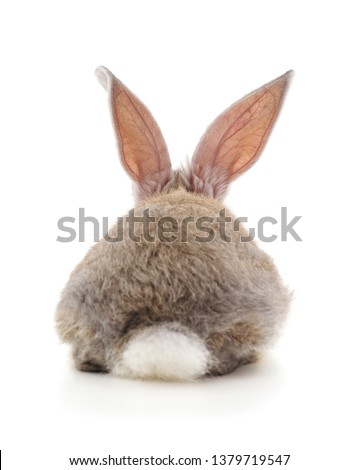One rabbit back isolated on a white background.