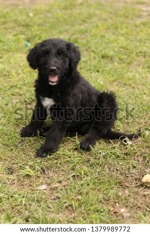 black fluffy dog mix in green grass #1379989772