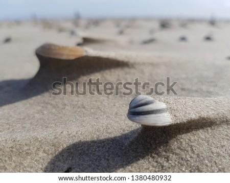 Beautiful mussel shells  #1380480932