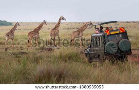 Giraffes herd in savannah #1380535055