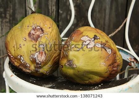 coconuts #138071243