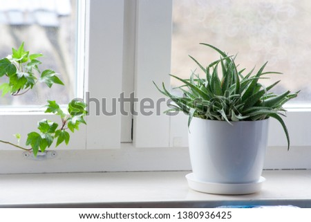 Green flower in a white flowerpot on the window sill at home #1380936425