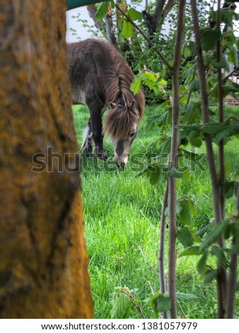 Miniature horse relaxing in a pasture #1381057979