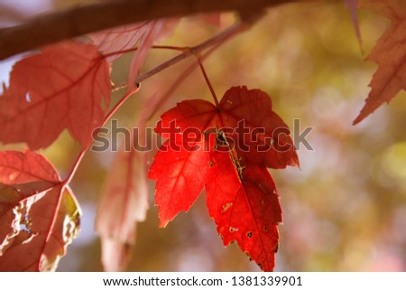 Autumn leaves at famous park in milan #1381339901