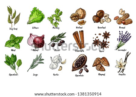 Herbs. Spices. Italian herb drawn black lines on a white background. Vector illustration. Bay leaf, lettuce, parsley, mint, onion, olives, spinach, sage, garlic, Walnut, hazelnut, peanuts, cinnamon #1381350914