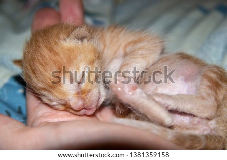 little ginger kitten sleeping on hand #1381359158