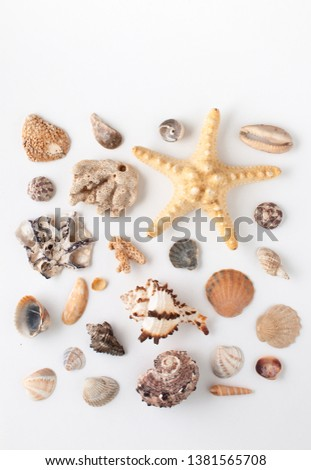 Background image with sea shells of different types. Copy space text #1381565708