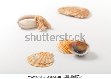 Background image with sea shells of different types. Copy space text #1381565714